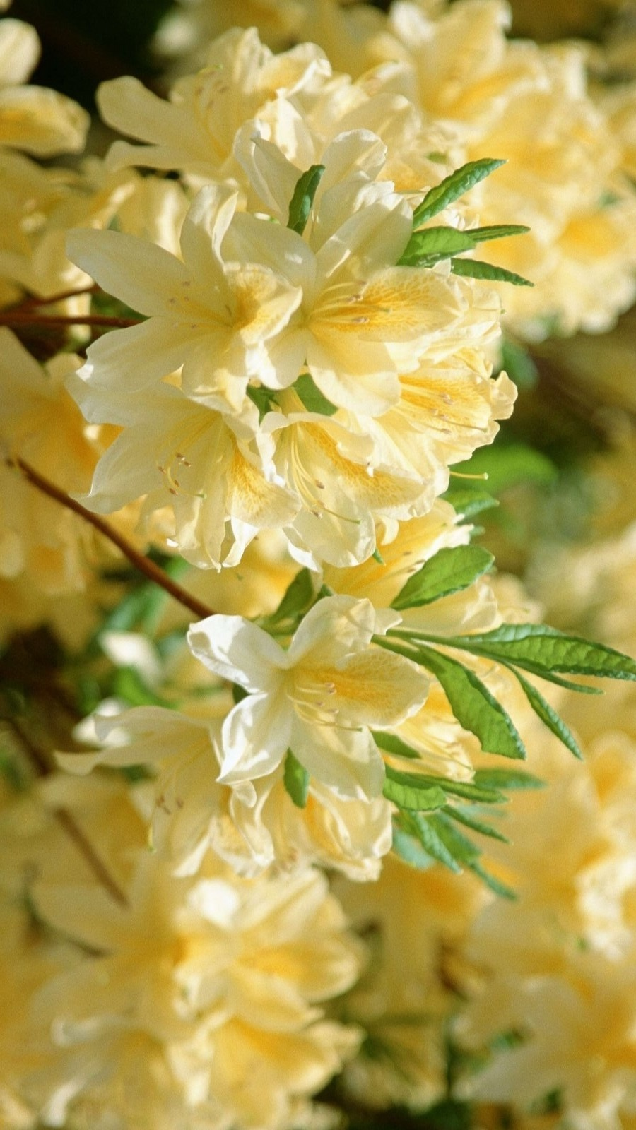 Book Ghostwriting Professional - Rhododendron